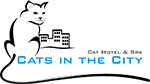 cats in the city